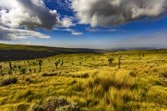 Simien Berge, Äthiopien lizenzfreies stockbild