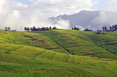 Simien mountain park Royalty Free Stock Images