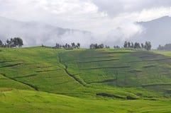 Simien mountain park Royalty Free Stock Photo