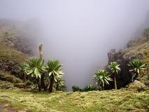 Simien mountains. National park, Amhara, Ethiopia Royalty Free Stock Image