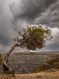Simien mountains tree Royalty Free Stock Photography