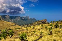 Simien National Park. Ethiopia. Simien Mountains National Park. Giant Lobelia in the foreground, Imet Gogo peak in the background Royalty Free Stock Images