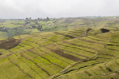Simien national park Stock Photo
