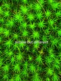 Similar But Different Concept. Similar But Different Original Naturalistic Conceptual Design. Message illustration with text. Tolerant Vivid and Fresh Conceptual royalty free stock images