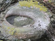 The similarity with the eye of a crocodile Royalty Free Stock Images