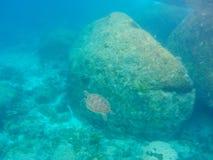Simma för havssköldpadda som är undervattens- i havet på Similan Marine Nati Arkivfoto