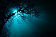 Simma i en dimma Arkivfoton