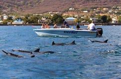 Simma med delfin Royaltyfri Fotografi