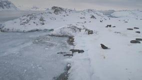 Simma och att vila skyddsremsor Antarktis landskap arkivfilmer