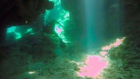 Simma till och med en tunnel, medan dyka i Utila arkivfilmer