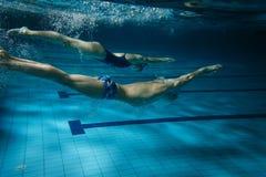 simmare Arkivbilder