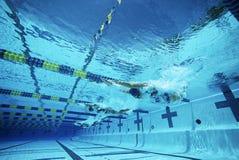 Simmare som simmar i pöl arkivfoto