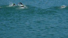 Simmare som simmar i sporttriathlon i en sjö om den soliga dagen lager videofilmer
