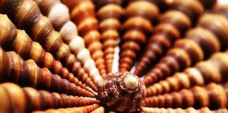 Simmetria delle conchiglie Fotografia Stock Libera da Diritti