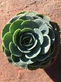 Simmetria perfetta con i verdi della natura fotografie stock