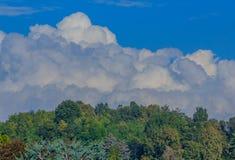 Simmetrical krajobraz chmury i drzewa fotografia royalty free