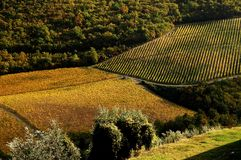 Simmetrical Wineyards in Tuscany, Chianti, Italy Stock Image