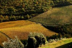 Simmetrical Wineyards in Tuscany, Chianti, Italy. Wineyards in Tuscany, vinegrapes, and leaves vine. Chianti region, in Tuscany, Italy stock image
