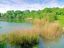 Simning sjö Royaltyfria Foton