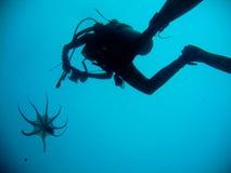 Simningtioarmad bläckfisk med dykaren royaltyfri foto