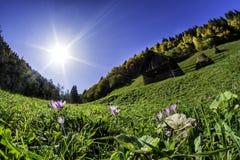 Simon Village - autumn time. Bran  area in autumn time Brasov county  Simon village Royalty Free Stock Photo