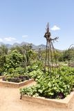 Vegetable garden in the Western Cape. South Africa Royalty Free Stock Images