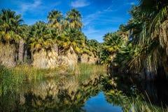 Simone Pond bij McCallum-Bosje in de Palmlente, Californië royalty-vrije stock foto