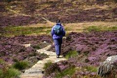 simonside της Northumberland λόφων Στοκ Εικόνες
