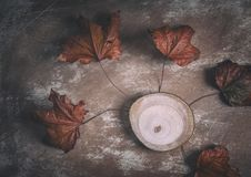 Simple Autumnal Composition of Dry Leaves and Tree Trunk. Simple autumnal composition made of dry maple leaves and tree trunk on scratchy rustic background stock images