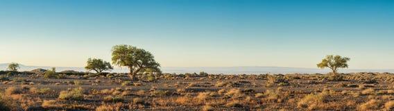 Simple avec des arbres au jour ensoleillé Photos stock