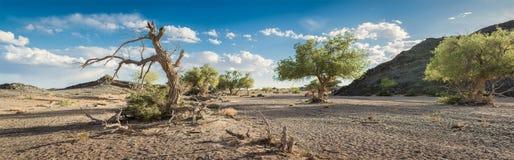 Simple avec des arbres au jour ensoleillé Photo libre de droits