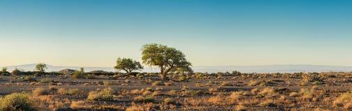 Simple avec des arbres au jour ensoleillé Images stock