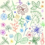 Simple botanical abstract illustration elements Stock Photography