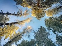 tops of trees illuminated by sun Royalty Free Stock Image