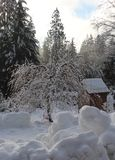 The Simple Beauty of a Winter Day. Evergreens draped in snow, deciduous trees  and bushes with frosted branches, snow covered roofs, and piles of icy snow Stock Photography