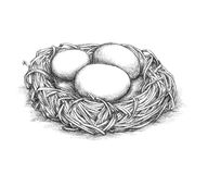 Simple bird nest with eggs. Illustration of a simple bird nest with some eggs royalty free illustration