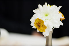 Simple bouquet Royalty Free Stock Photos