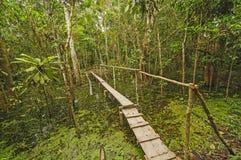 Simple Bridge across a rain forest pond Stock Photography