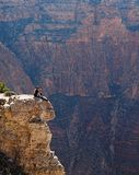 A simple chat around the edges of the South Rim - AZ - Royalty Free Stock Photography