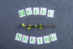 Simple composition of Hello spring calligraphy lettering and branche with young shoots of greenery on dark grey stone background. royalty free stock images