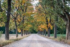 Simple Country Gravel Road in Autumn at Countryside Forest with Oak Trees. Around Clouds in the Sky Alley royalty free stock images
