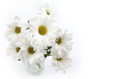 Simple daisies Royalty Free Stock Images