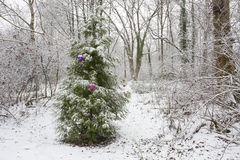 Christmas tree with ornaments in nature Royalty Free Stock Photo