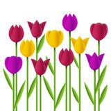 Simple design tulips Stock Images