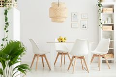 Dining room with ivy plants. Simple dining room interior with palm and ivy plants, white chairs and bowl of lemons on the table royalty free stock photography