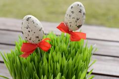 Simple Easter decoration with mottled eggs and wheat grass stock image