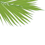 Simple and elegant frame with palm leaf Stock Photo