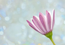 Simple flower Stock Images