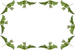 Simple frame of mint leaves isolated on white background Royalty Free Stock Photo