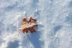 Simple frozen leaf Royalty Free Stock Photos